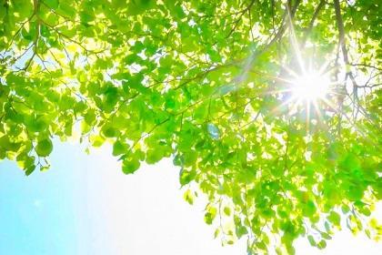 第48回TATTAサタデーラン~新緑の中を走ろう~【ハーフマラソン】